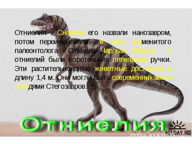 Отниелия . Сначала его назвали нанозавром, потом переименовали в честь знаменитого палеонтолога Отниела Чарльза Марша. У отниелий были коротенькие пятипалые ручки. Эти растительноядные животные достигали в длину 1,4 м. Они могли быть современниками …