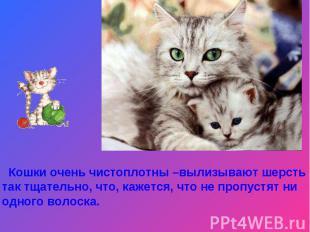 Кошки очень чистоплотны –вылизывают шерсть так тщательно, что, кажется, что не п