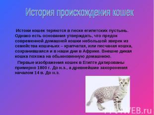 История происхождения кошек Истоки кошек теряются в песке египетских пустынь. Од