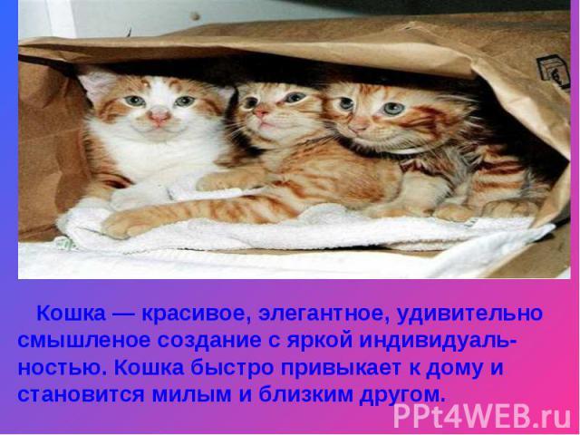 Кошка — красивое, элегантное, удивительно смышленое создание с яркой индивидуаль-ностью. Кошка быстро привыкает к дому и становится милым и близким другом.