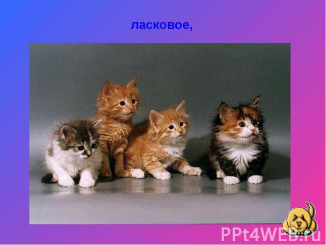 ласковое,