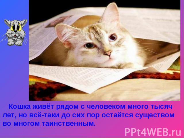 Кошка живёт рядом с человеком много тысяч лет, но всё-таки до сих пор остаётся существом во многом таинственным.