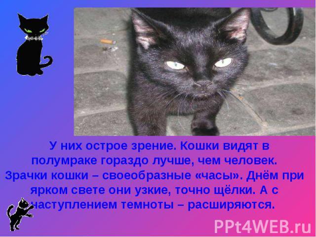 У них острое зрение. Кошки видят в полумраке гораздо лучше, чем человек.Зрачки кошки – своеобразные «часы». Днём при ярком свете они узкие, точно щёлки. А с наступлением темноты – расширяются.