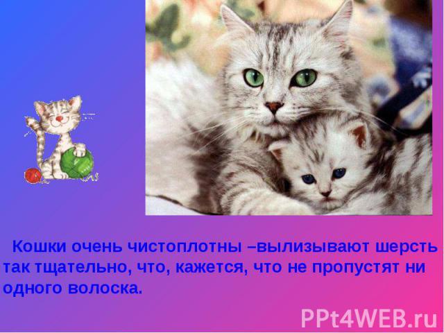 Кошки очень чистоплотны –вылизывают шерсть так тщательно, что, кажется, что не пропустят ни одного волоска.