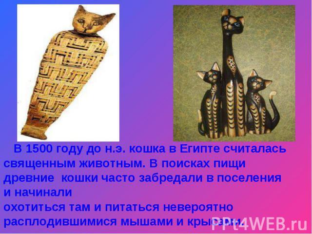 В 1500 году до н.э. кошка в Египте считалась священным животным. В поисках пищи древние кошки часто забредали в поселения и начинали охотиться там и питаться невероятно расплодившимися мышами и крысами.