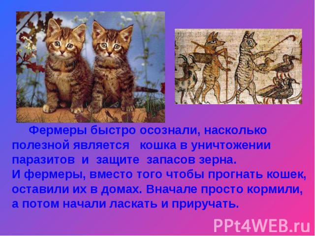 Фермеры быстро осознали, насколько полезной является кошка в уничтожении паразитов и защите запасов зерна. И фермеры, вместо того чтобы прогнать кошек, оставили их в домах. Вначале просто кормили, а потом начали ласкать и приручать.