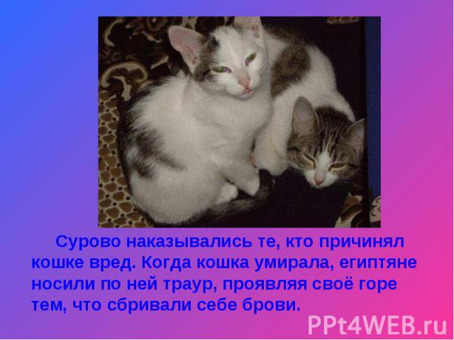Сурово наказывались те, кто причинял кошке вред. Когда кошка умирала, египтяне носили по ней траур, проявляя своё горе тем, что сбривали себе брови.