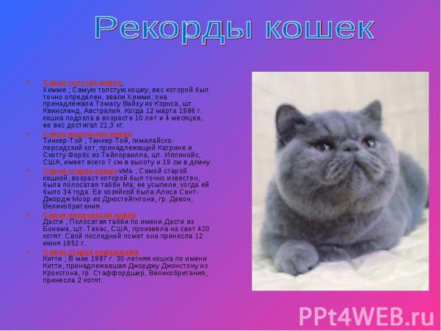 Рекорды кошек Самая толстая кошка Химми ; Самую толстую кошку, вес которой был точно определен, звали Химми; она принадлежала Томасу Вайзу из Кэрнса, шт. Квинсленд, Австралия. Когда 12 марта 1986 г. кошка подохла в возрасте 10 лет и 4 месяцев, ее ве…