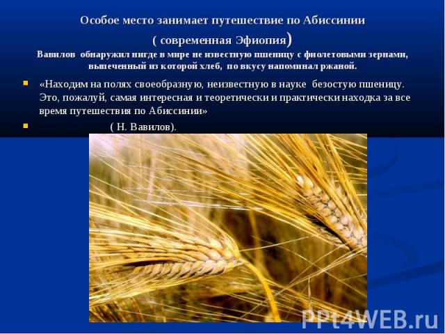 Особое место занимает путешествие по Абиссинии( современная Эфиопия)Вавилов обнаружил нигде в мире не известную пшеницу с фиолетовыми зернами, выпеченный из которой хлеб, по вкусу напоминал ржаной. «Находим на полях своеобразную, неизвестную в науке…