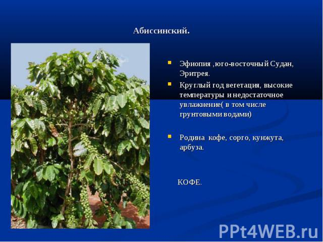 Абиссинский. Эфиопия ,юго-восточный Судан, Эритрея.Круглый год вегетация, высокие температуры и недостаточное увлажнение( в том числе грунтовыми водами)Родина кофе, сорго, кунжута, арбуза. КОФЕ.