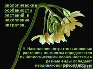 Биологические особенности растений и накопление нитратов. Накопление нитратов в