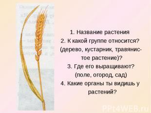 1. Название растения 2. К какой группе относится? (дерево, кустарник, травянис-