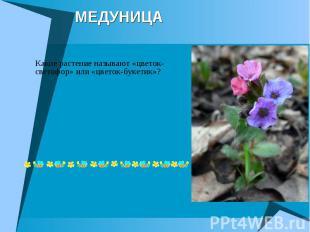МЕДУНИЦА Какое растение называют «цветок-светофор» или «цветок-букетик»?