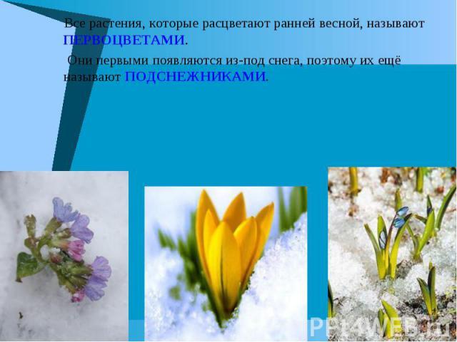 Все растения, которые расцветают ранней весной, называют ПЕРВОЦВЕТАМИ. Они первыми появляются из-под снега, поэтому их ещё называют ПОДСНЕЖНИКАМИ.