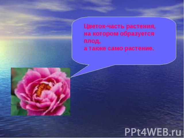 Цветок-часть растения, на котором образуется плод, а также само растение.