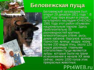"""Беловежская пуща Беловежский заповедник был открыт 29 декабря 1921 года """". В 197"""
