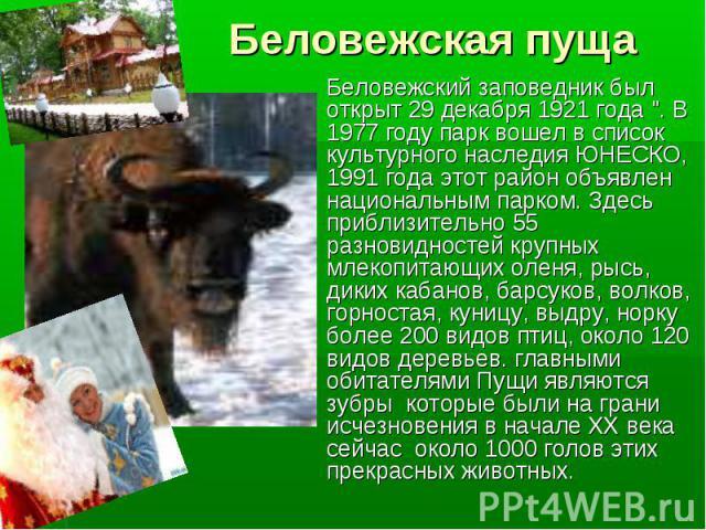 Беловежская пуща Беловежский заповедник был открыт 29 декабря 1921 года
