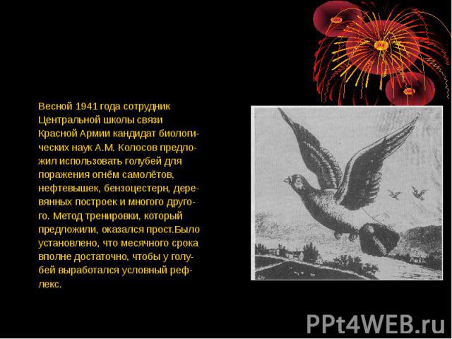 Весной 1941 года сотрудник Центральной школы связи Красной Армии кандидат биологи-ческих наук А.М. Колосов предло-жил использовать голубей для поражения огнём самолётов,нефтевышек, бензоцестерн, дере-вянных построек и многого друго-го. Метод трениро…