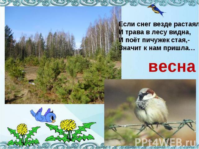 Если снег везде растаялИ трава в лесу видна,И поёт пичужек стая,-Значит к нам пришла…весна