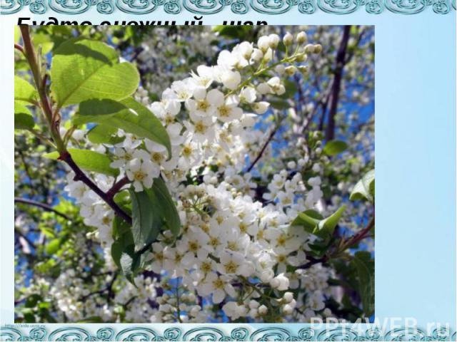 Будто снежный шар бела, По весне она цвела, Нежный запах источала А когда пора настала, Разом сделалась она Вся от ягоды черна.