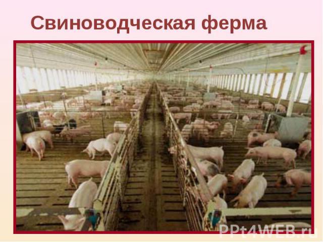 Свиноводческая ферма