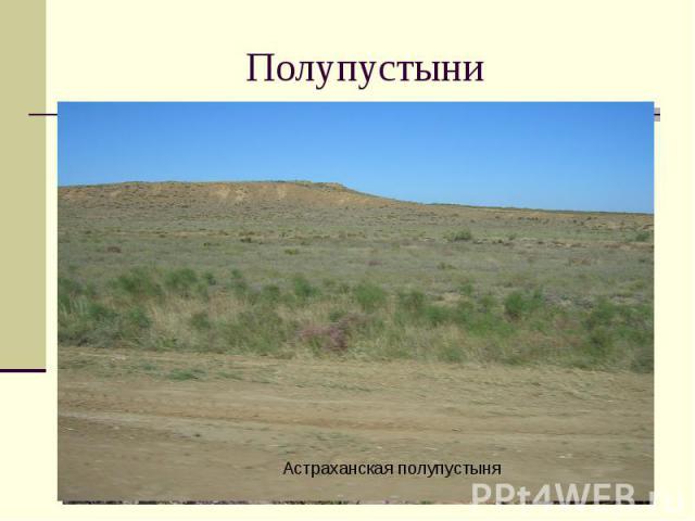 Полупустыни Астраханская полупустыня