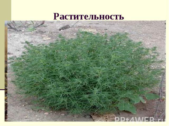 Растительность Атлас стр. 28 учебник Перечислите виды растений полупустыни и пустыни. Какие приспособленности есть у этих растений к жизни в суровых условиях?