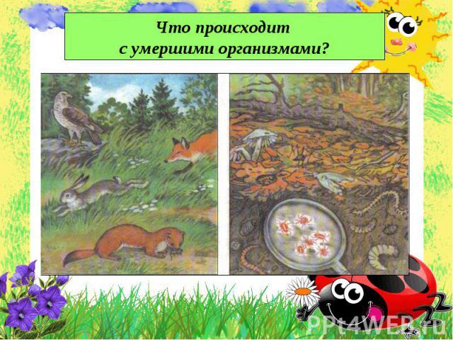 Что происходит с умершими организмами?