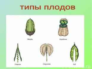 типы плодов