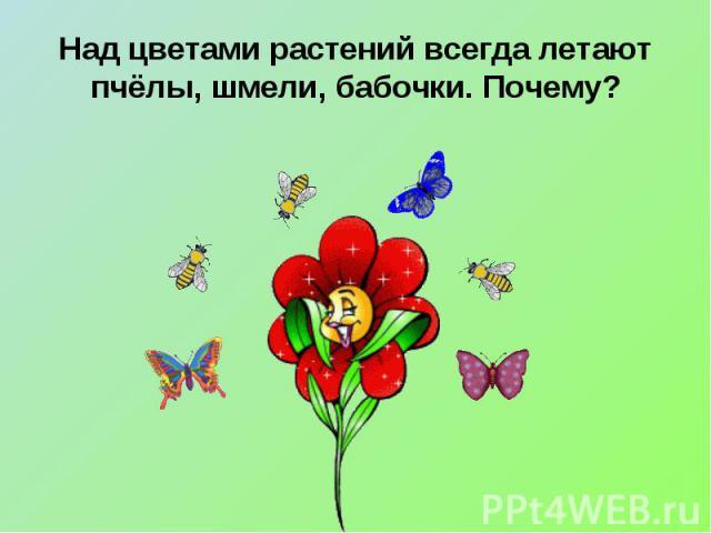 Над цветами растений всегда летают пчёлы, шмели, бабочки. Почему?