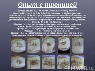 Опыт с пшеницей Начало опыта №1 08.09.08г. 9:00 по московскому времени.В посуду