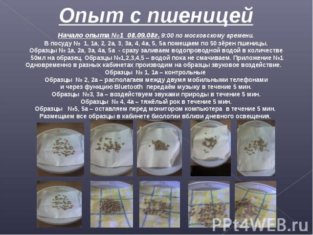 Опыт с пшеницей Начало опыта №1 08.09.08г. 9:00 по московскому времени.В посуду № 1, 1а, 2, 2а, 3, 3а, 4, 4а, 5, 5а помещаем по 50 зёрен пшеницы.Образцы № 1а, 2а, 3а, 4а, 5а - сразу заливаем водопроводной водой в количестве 50мл на образец. Образцы …