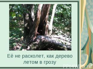 Её не расколет, как дерево летом в грозу