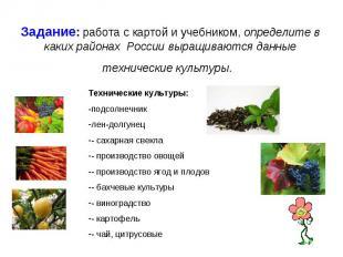 Задание: работа с картой и учебником, определите в каких районах России выращива