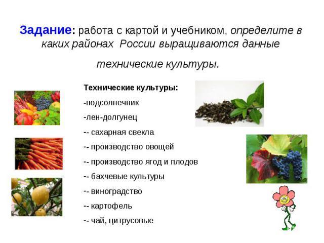 Задание: работа с картой и учебником, определите в каких районах России выращиваются данные технические культуры. Технические культуры:-подсолнечниклен-долгунец- сахарная свекла- производство овощей- производство ягод и плодов- бахчевые культуры- ви…