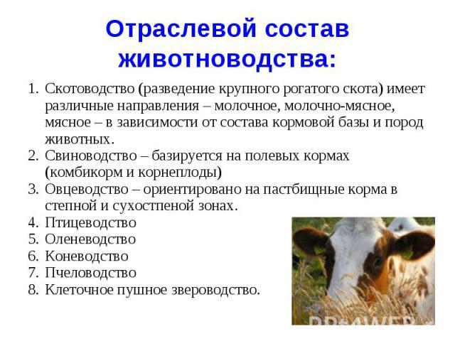 Отраслевой состав животноводства : Скотоводство (разведение крупного рогатого скота) имеет различные направления – молочное, молочно-мясное, мясное – в зависимости от состава кормовой базы и пород животных.Свиноводство – базируется на полевых кормах…