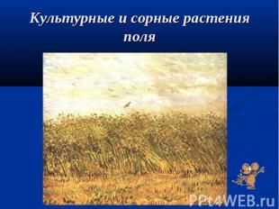 Культурные и сорные растения поля