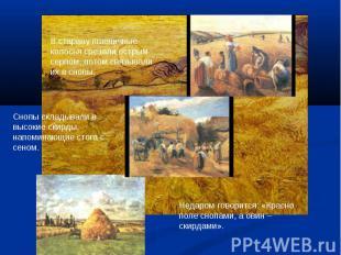В старину пшеничные колосья срезали острым серпом, потом связывали их в снопы.Сн