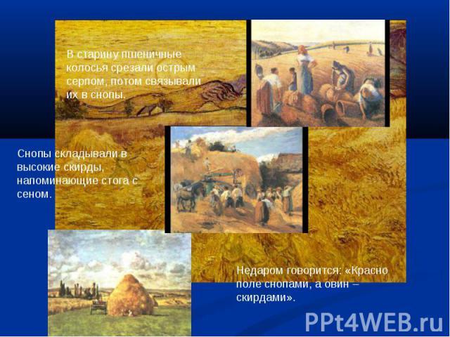 В старину пшеничные колосья срезали острым серпом, потом связывали их в снопы.Снопы складывали в высокие скирды, напоминающие стога с сеном.Недаром говорится: «Красно поле снопами, а овин – скирдами».