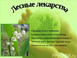 Лесные лекарстваГирлянды белых маленьких колокольчиков висят весной между больши