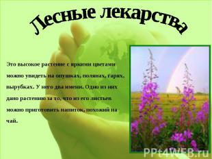 Лесные лекарстваЭто высокое растение с яркими цветами можно увидеть на опушках,