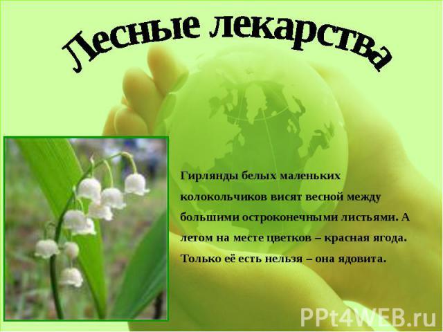 Лесные лекарстваГирлянды белых маленьких колокольчиков висят весной между большими остроконечными листьями. А летом на месте цветков – красная ягода. Только её есть нельзя – она ядовита.