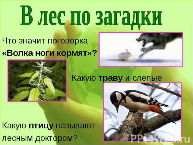 В лес по загадки Что значит поговорка «Волка ноги кормят»? Какую траву и слепые знают?Какую птицу называют лесным доктором?