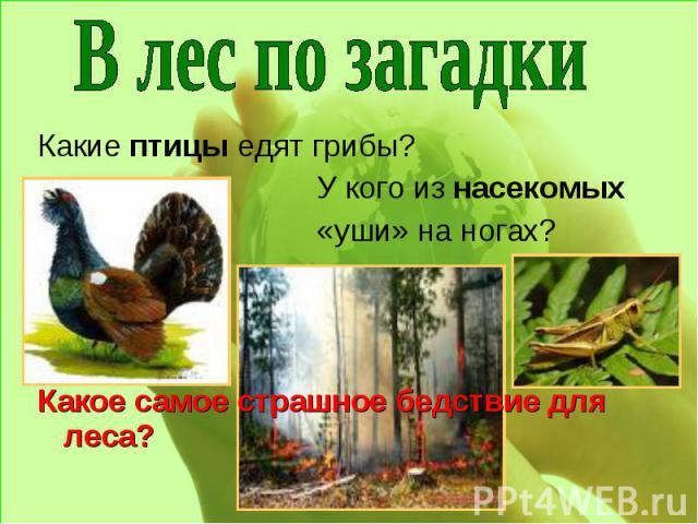 В лес по загадки Какие птицы едят грибы?У кого из насекомых «уши» на ногах?Какое самое страшное бедствие для леса?