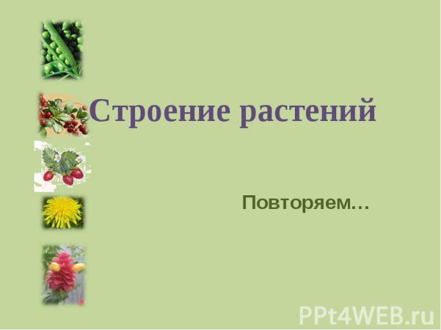 Строение растений Повторяем…