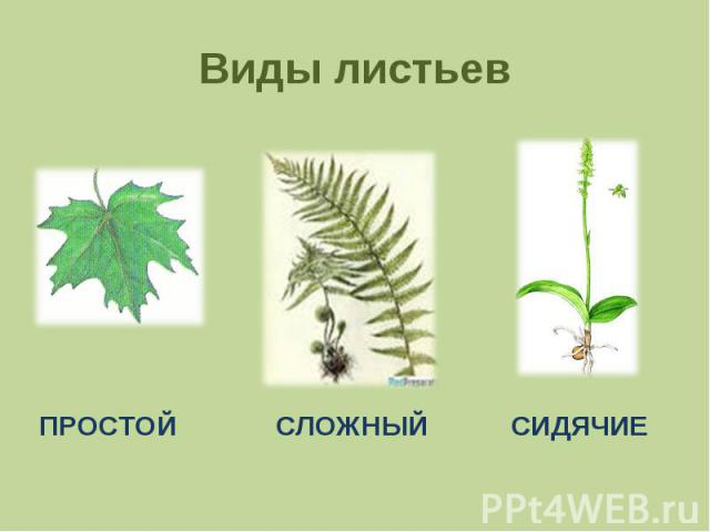 Виды листьев ПРОСТОЙСЛОЖНЫЙСИДЯЧИЕ