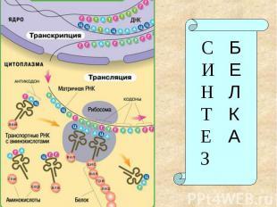 СБИЕНЛТКЕАЗ