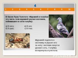В басне Льва Толстого «Муравей и голубка» в эту часть тела муравей укусил охотни