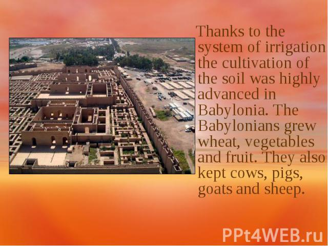 Thanks to the system of irrigation the cultivation of the soil was highly advanced in Babylonia. The Babylonians grew wheat, vegetables and fruit. They also kept cows, pigs, goats and sheep.