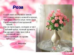 Роза О ней поют поэты всех веков.Нет в мире ничего нежней и краше,Чем этот сверт
